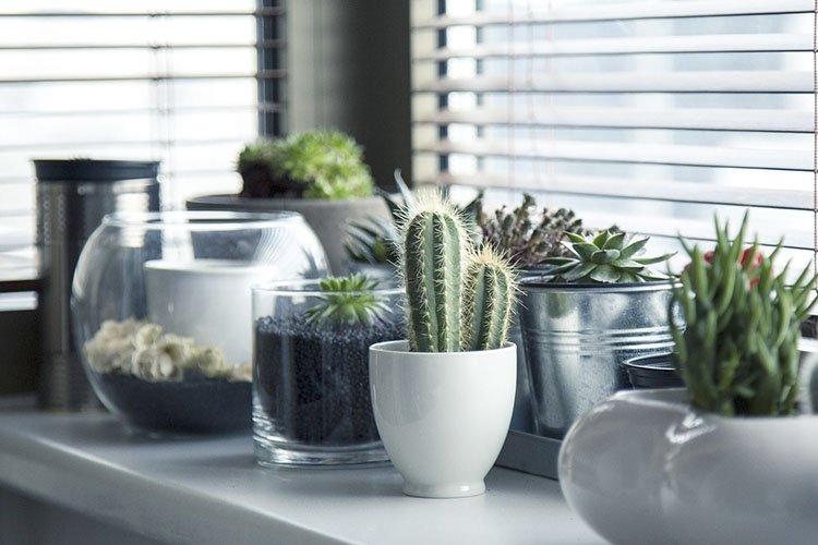 aromas naturales en casa